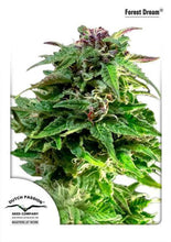Load image into Gallery viewer, Forest Dream - Feminised Seeds
