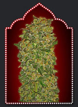 Load image into Gallery viewer, Chocolate Kush - Feminised