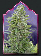 Load image into Gallery viewer, Automatic Mix - Autoflowering