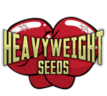 Load image into Gallery viewer, Money Bush - Heavyweight Seeds - Feminised