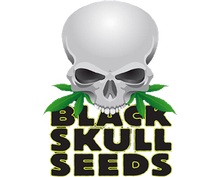 Load image into Gallery viewer, Skull Ryder - Black Skull Seeds