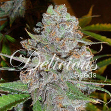 Load image into Gallery viewer, La Diva - Autoflowering