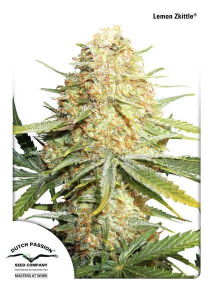 Lemon Zkittle - Auto Feminised Seeds