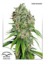 Load image into Gallery viewer, Outlaw Amnesia - Feminised Seeds
