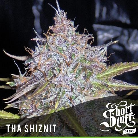 Tha Shiznit - Short Stuff Seeds -  Autoflowering Feminised
