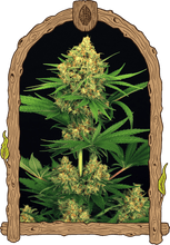 Load image into Gallery viewer, Tangerine Kush - Feminied