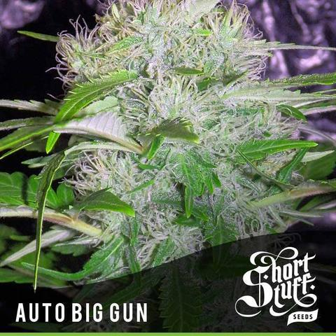 Big Gun - Short Stuff Seeds - Autoflowering Feminised