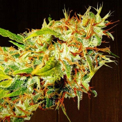 Zamaldelica  - Feminized Seeds