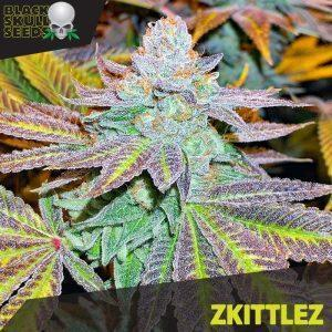Zkittlez - Black Skull Seeds