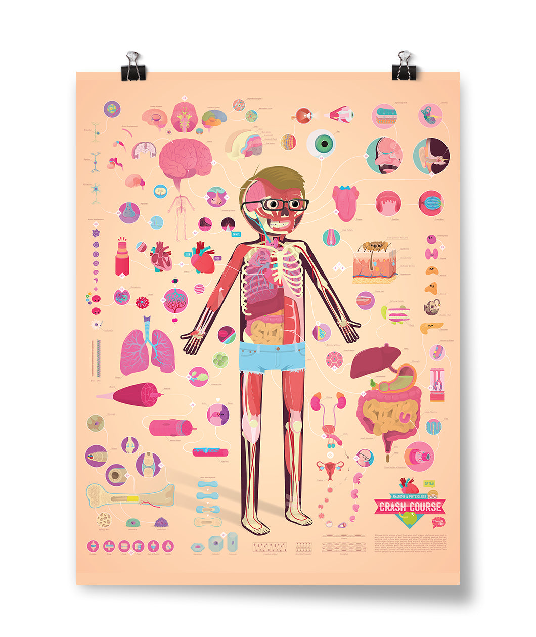 CrashCourse Anatomy and Physiology Poster