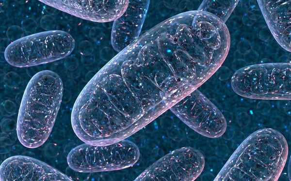 5 ways to boost Mitochondria to improve cell health and energy