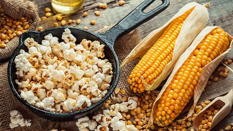 Prepared popcorn in frying pan, corn seeds in bowl and corncobs