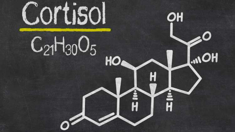 Food that reduce cortisol