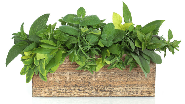 Weight loss tip - improve your motivation to cook by growing your own herbs