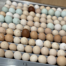 Load image into Gallery viewer, Isabella Brahma Hatching Eggs - 6