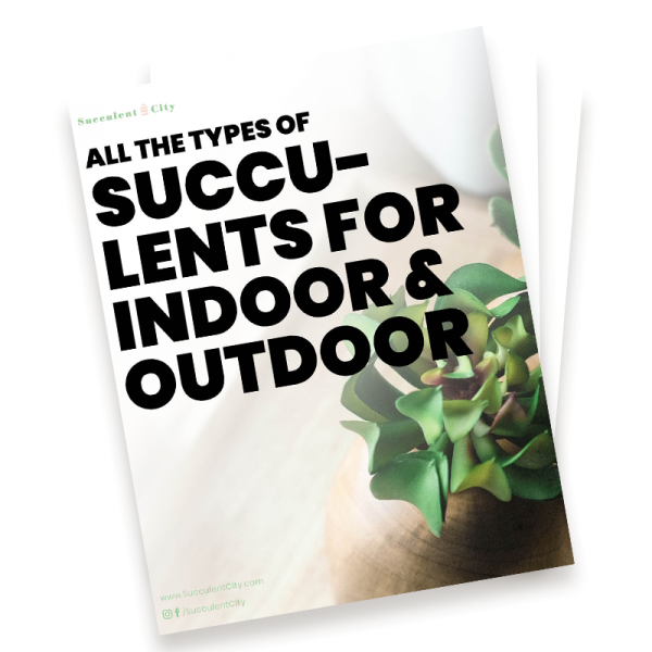All the Types of Succulents for Indoor & Outdoor