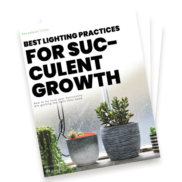 Best Lighting Practices for Succulent Growth
