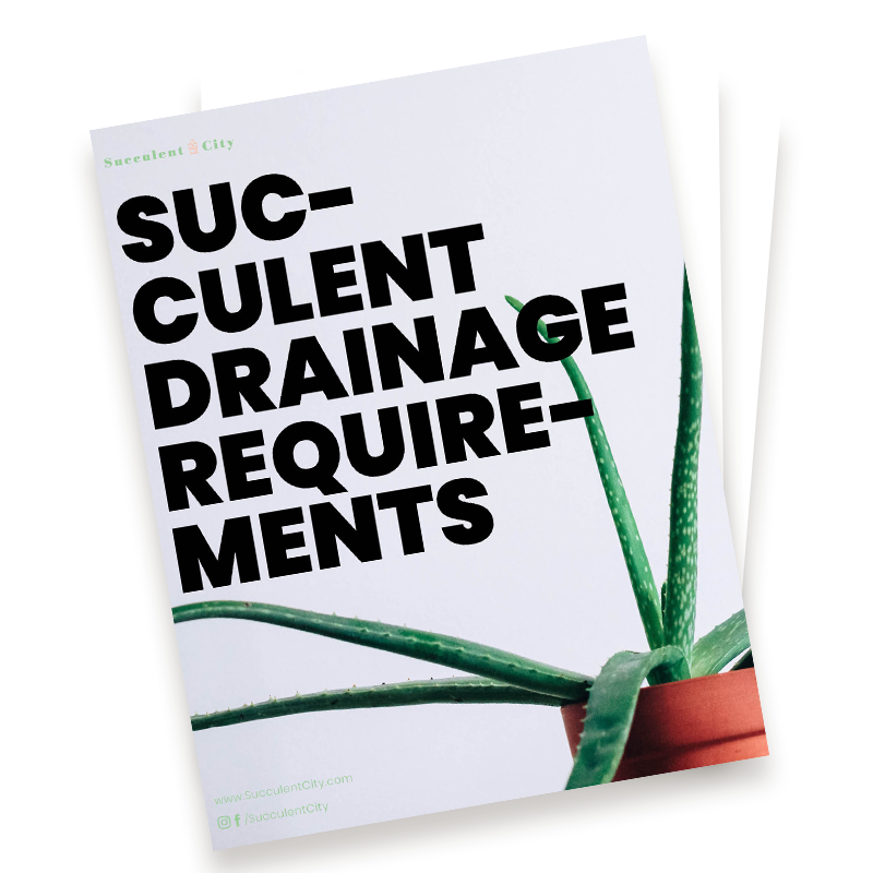 Succulent Drainage Requirements