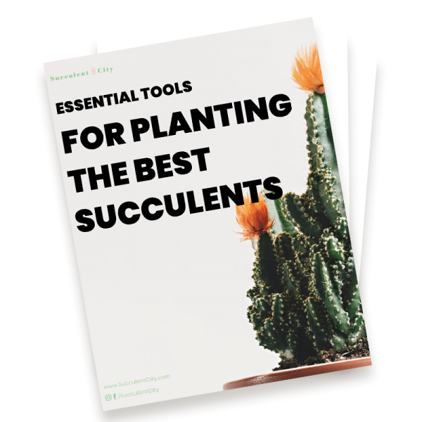 Essential Tools for Planting the Best Succulents