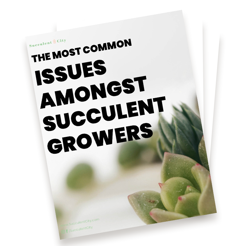 The Most Common Issues Amongst Succulent Growers