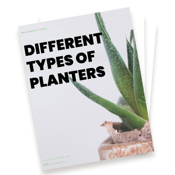 Different Types of Planters
