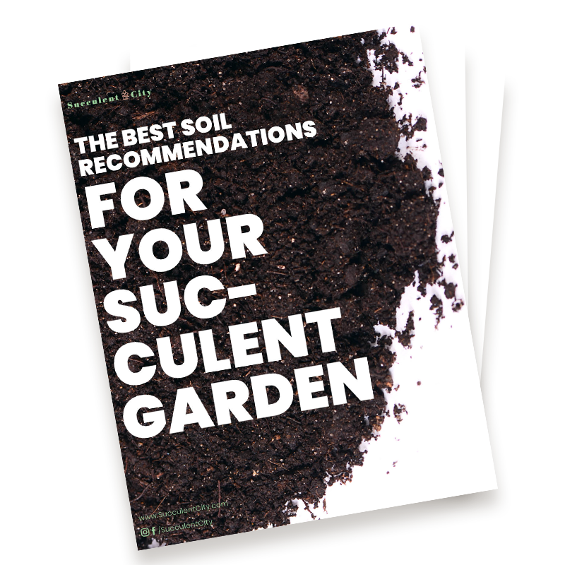 The Best Soil Recommendations for Your Succulent