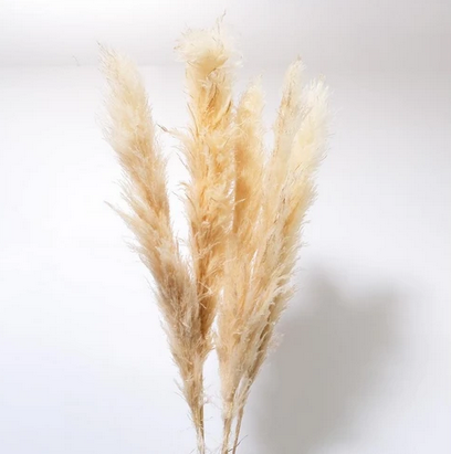 Pampas Grass - Medium - 4 stems per bunch