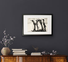 Load image into Gallery viewer, framed hand drawn image print of 5 penguins hung above shelf