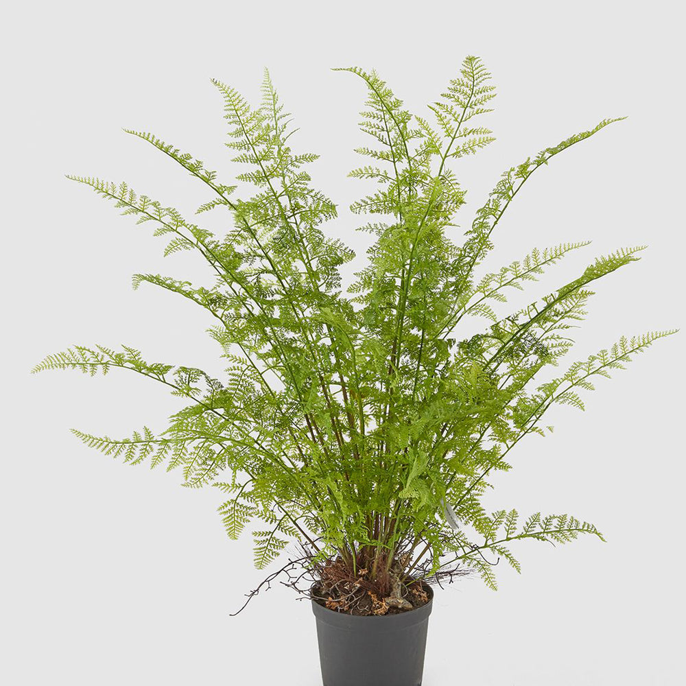 Artificial Areca Palm Plant