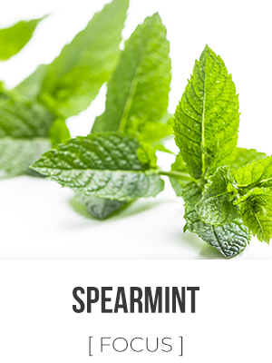Far West Spearmint - 4 oz. Reed Diffuser Oil