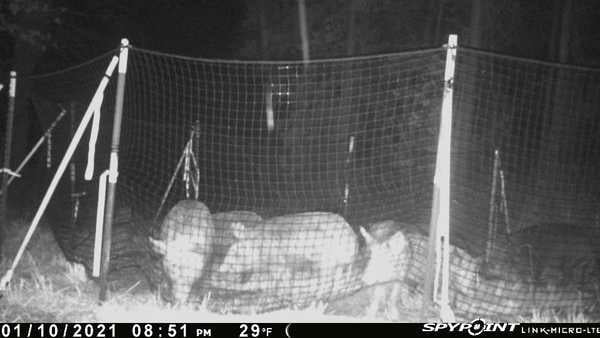 pig brig trap system catch photo
