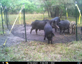 pig brig trap system loaded in the morning