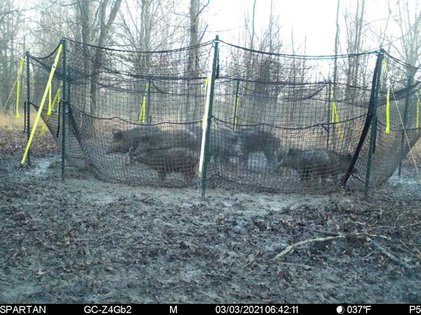 pig brig trap system picture