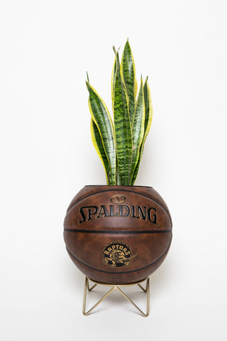"""The Last Stand"" Geometric Plant Holder"