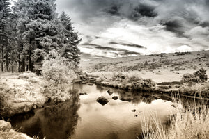 Bellever, Dartmoor 4