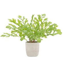 Load image into Gallery viewer, Rabbit Foot Fern Potted Faux Plant