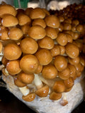 Nameko Mushrooms (250g)