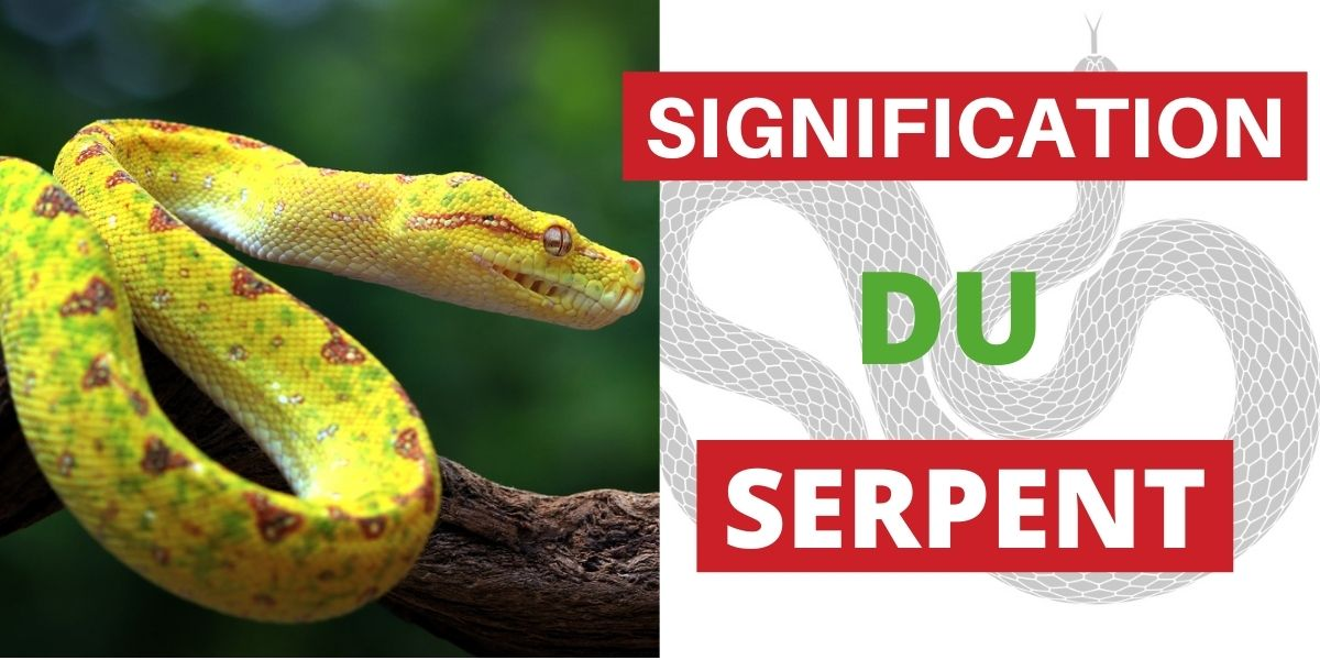 Signification du Serpent