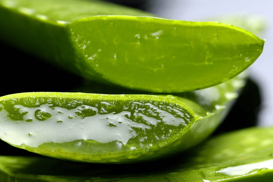 The Benefits of Aloe Vera for Locs