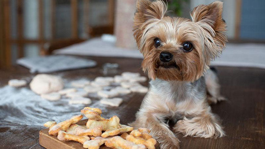 Become a Doggy Dessert Chef