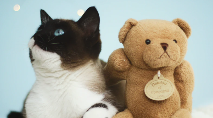 A plush toy that is loved, with a teddy bear and a cat.