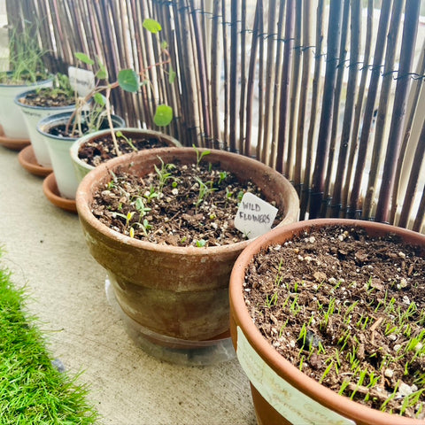 Balcony gardening in containers