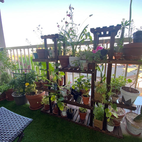 Small space gardening on a balcony
