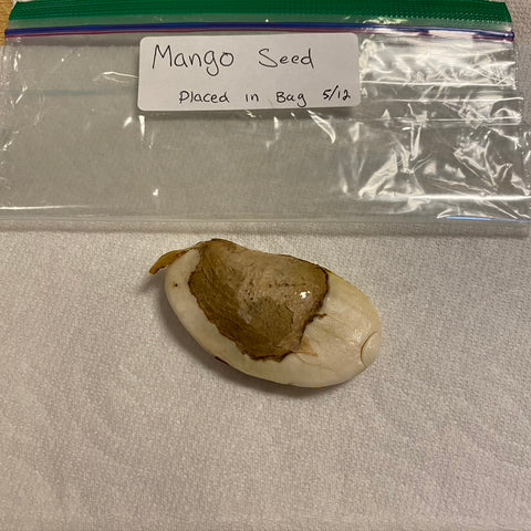 Place the seed in a paper towel and then in a plastic bag for moisture and humidity