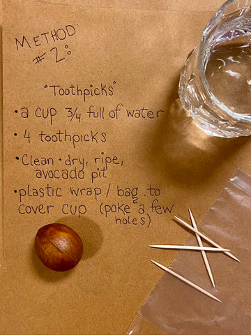 Growing an avocado seed with toothpicks and water