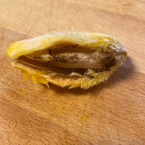 Use your fingers to open up the mango seed