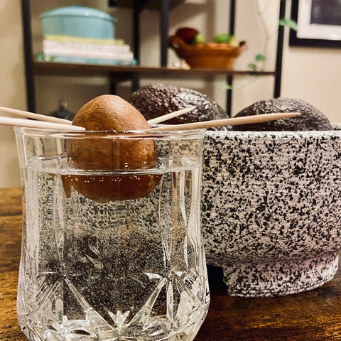 Growing avocado seed with toothpicks and a glass of water