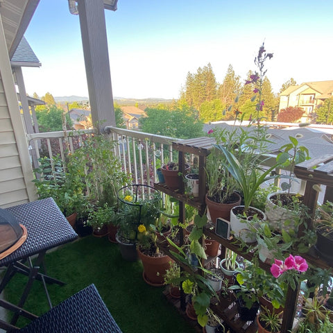 Growing native plants, edible plants and flowers on a balcony