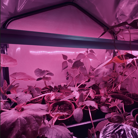 Starting seeds indoors in a greenhouse using a grow light and heat mat