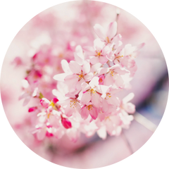 Profile picture of pink flowers in a circle